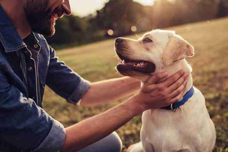CBD Cannabis Terapeutica Per Cani, Gatti ed Altri Animali Domestici: Come e Quando Utilizzarla e Quali Sono i Suoi Effetti